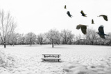 A Scenic Cold Winter Landscape with Snow and Trees and a Flock of Birds Flying By Prints by  graphicphoto