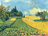 Grain Fields on the Hills of Argenteuil Prints by Alfred Sisley