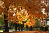 A Huge Orange Maple Tree in a Front Yard Prints by  JAHolcombe