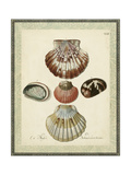 Bookplate Shells III Print