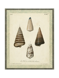 Bookplate Shells VI Posters