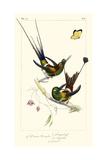 Lemaire Hummingbirds IV Posters par C.L. Lemaire