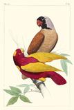 Lemaire Parrots II Poster by C.L. Lemaire