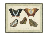 Bookplate Butterflies Trio III Prints