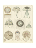 Jellyfish Display Poster by  Oken