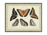 Bookplate Butterflies Trio I Art