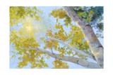 Aspen Canopy Art by Nanette Oleson