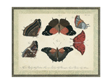 Bookplate Butterflies Trio II Posters