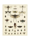 Dragonfly Display Print by  Oken