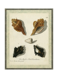 Bookplate Shells I Poster