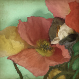 Aquatic Poppies I Posters by Jennifer Goldberger
