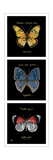 Primary Butterfly Panel II Prints by Ginny Joyner