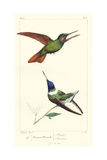 Lemaire Hummingbirds II Posters by C.L. Lemaire