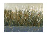 By the Tall Grass II Premium Giclee Print by Tim O'toole
