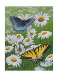 Butterflies and Daisies Premium Giclee Print by Fred Szatkowski