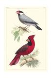 Lemaire Birds I Poster par C.L. Lemaire