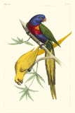 Lemaire Parrots IV Print by C.L. Lemaire