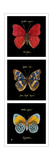 Primary Butterfly Panel I Posters by Ginny Joyner
