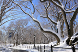 Winter Snow in Central Park, New York City Photographic Print by  Zigi