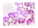 Fluttering Orchid I Prints by  Roozbeh