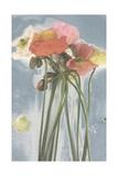 Poppy Spray I Poster by Jennifer Goldberger
