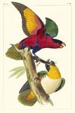 Lemaire Parrots I Affischer av C.L. Lemaire