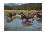 Buffalo Crossing Prints by Jack Sorenson