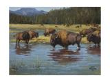 Buffalo Crossing Premium Giclee Print by Jack Sorenson