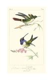 Lemaire Hummingbirds I Prints by C.L. Lemaire
