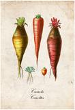 Carrots Prints