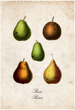 Pears Posters