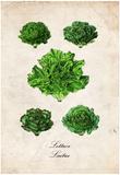 Lettuce Posters