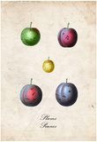 Plums Posters