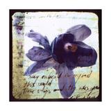 Blooming Purple II Premium Giclee Print