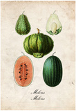 Melons Posters