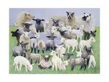 Feeling Sheepish Giclee Print by Pat Scott