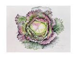 January King Cabbage Giclee Print by Alison Cooper