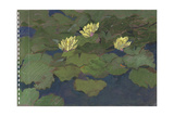 White Waterlilies, 1980s Giclee Print by Hugh Bulley