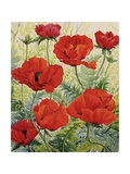 Large Red Poppies Giclee Print by Christopher Ryland