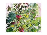 Wild Flowers with Comfrey and Campion Giclee Print by Christopher Ryland