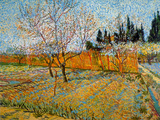 Peach Trees Prints by Vincent van Gogh