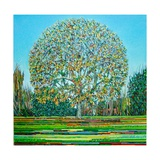Bow Tree Autumn Giclee Print by Noel Paine