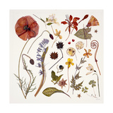 Hannah's Poppy, 2011 Giclee Print by Rachel Pedder-Smith