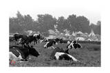 Woodstock- Cows in the Pasture (Black and White) Prints by  Epic Rights