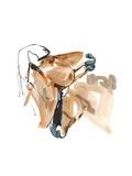 Nuzzle (Przewalski), 2013 Giclee Print by Mark Adlington