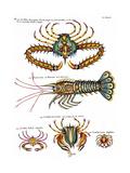 De haut en bas: crabe et scorpion dangereux mais comestible, écrevisse de Hourive Giclee Print