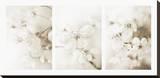 Vernus Triptych (sepia) Leinwand von Eva Charlotte Fransson