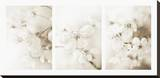 Vernus Triptych (sepia) Stretched Canvas Print by Eva Charlotte Fransson