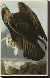 Golden Eagle Stretched Canvas Print by John James Audubon
