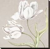 Soft Tulip II Stretched Canvas Print by Ellen Hudson
